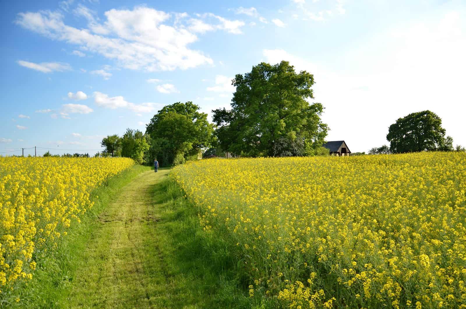Chemin pour se promener au départ de la ferme - gîte rural de Haute Forêt en Vallée du Loir