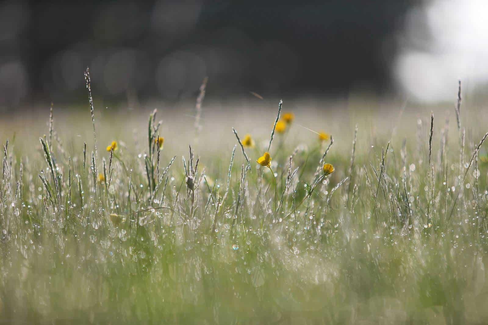 De jolies fleurs à la rosée du matin - gîte rural de Haute Forêt en Vallée du Loir