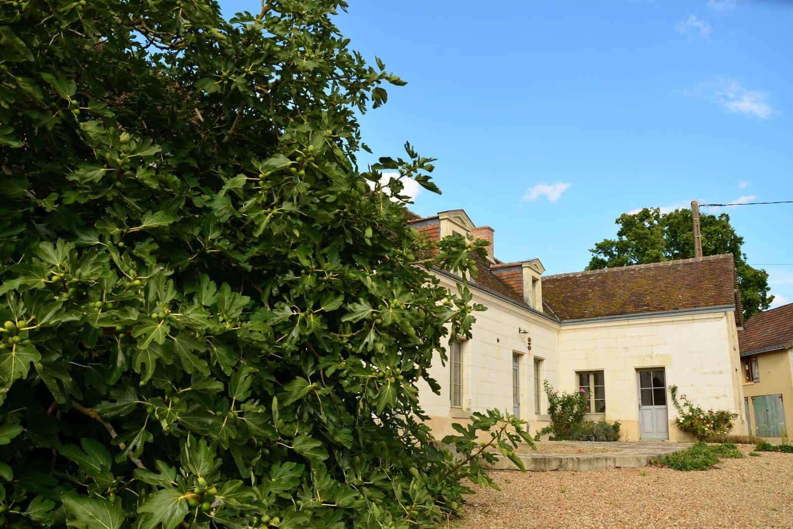 L'avant de la ferme et le figuier - gîte rural de Haute Forêt en Vallée du Loir