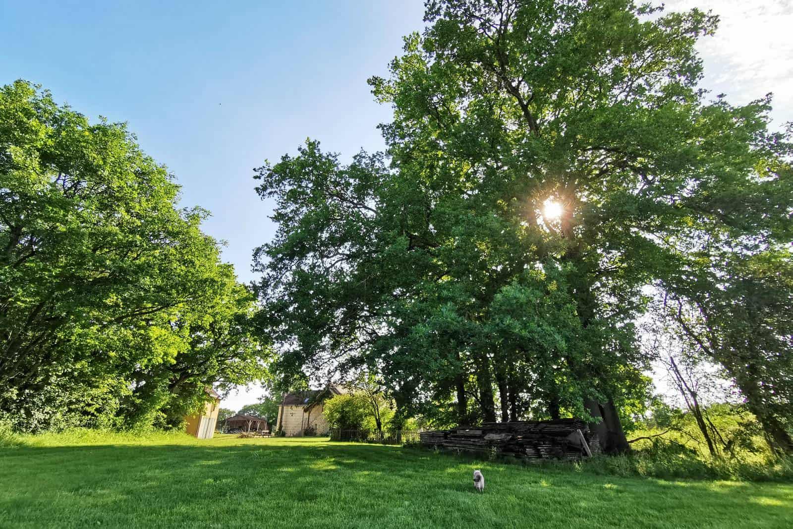 Les grands chênes qui donnent une belle ombre - gîte rural de Haute Forêt en Vallée du Loir